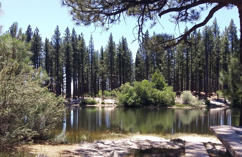 Davis pond