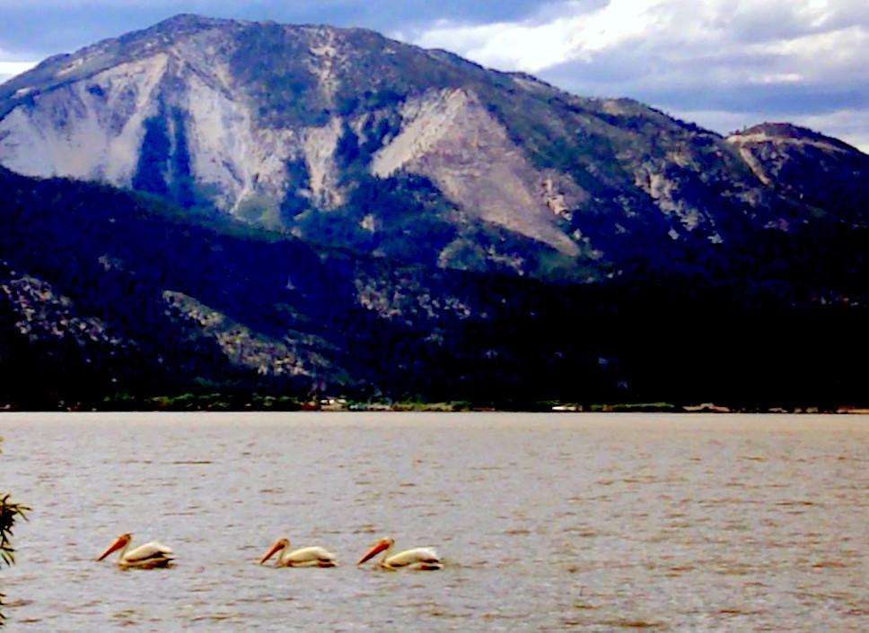 Pelicans, Washoe Lake, Slide Mtn